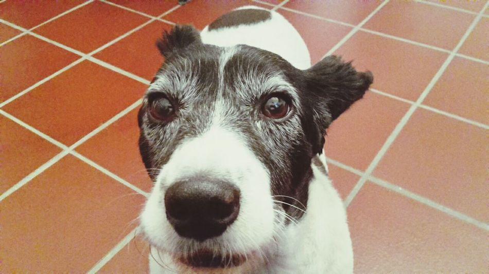 Domestic Animals Dog Pets Close-up No People One Animal Animal Themes Outdoors Ugo