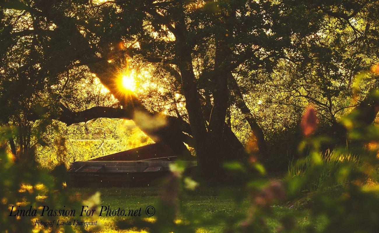 By the river Summer Dalarna Scandinavia Beautiful Sweden Flowers, Nature And Beauty Beautiful Colors Landscape Blommor Landskap Landscape_photography Trees Sunset Sunshine Colorful Nature Photography Swedish Nature Nature_collection Nordic Nature Naturelovers Summertime Summer Views