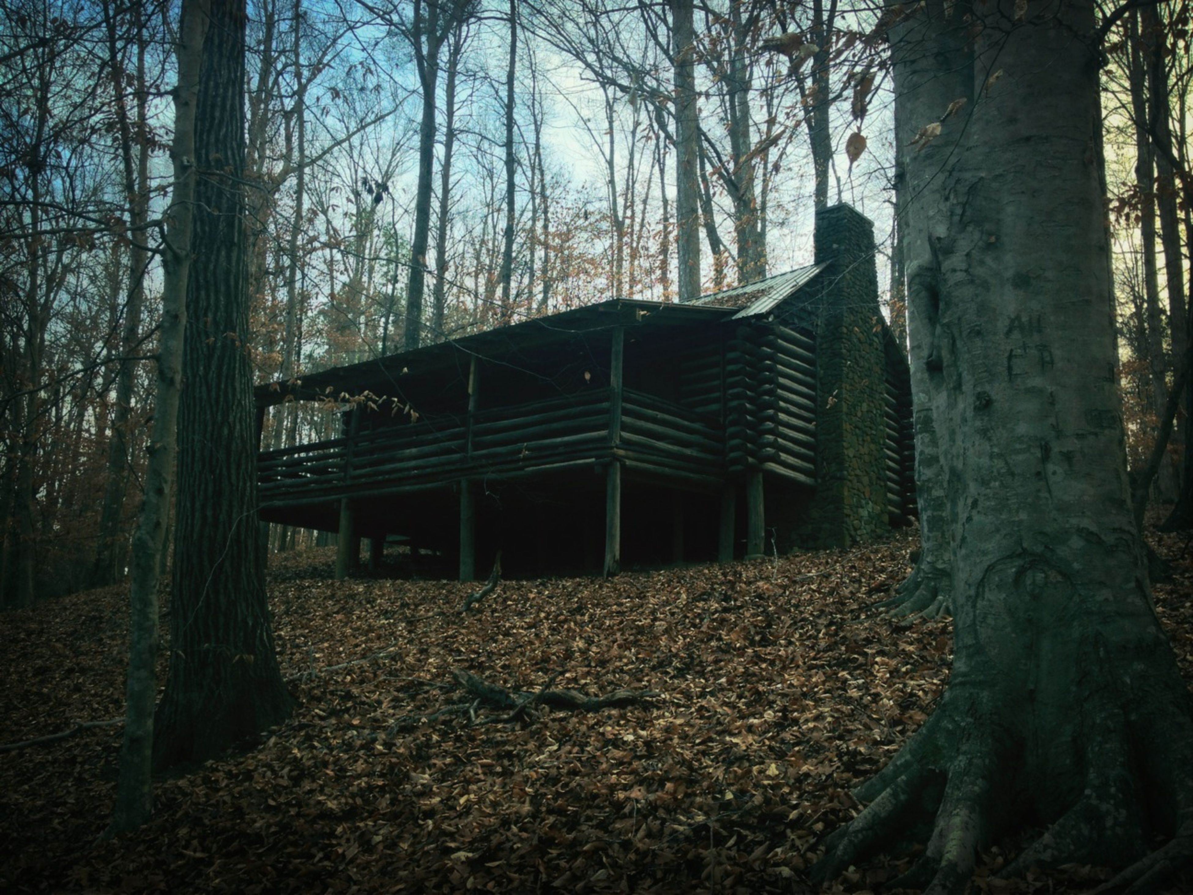 architecture, built structure, tree, building exterior, house, abandoned, bare tree, old, damaged, tree trunk, obsolete, branch, forest, sky, day, run-down, outdoors, deterioration, field, nature