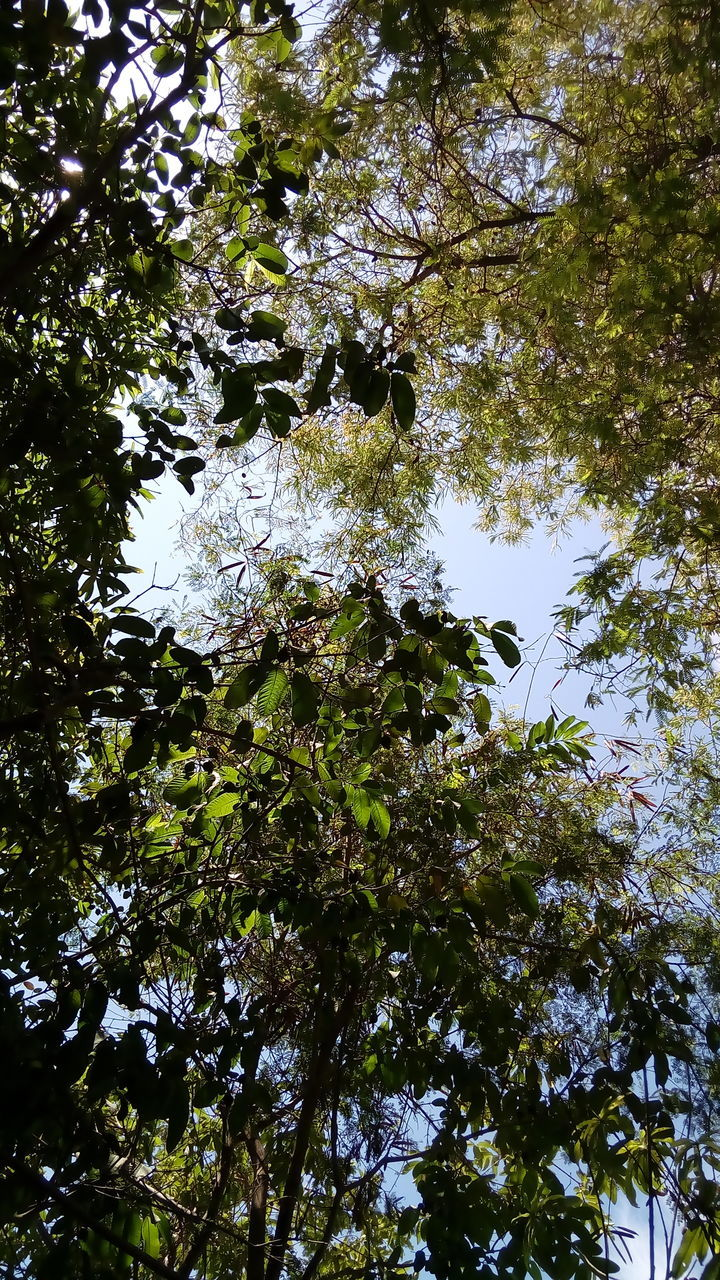 tree, growth, branch, low angle view, nature, beauty in nature, no people, blossom, day, springtime, flower, outdoors, fragility, leaf, freshness, sky