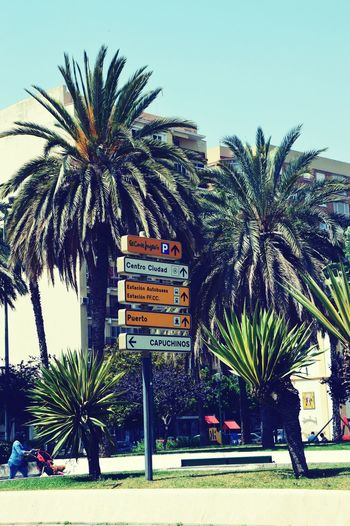 Spain♥ Palm Trees Beautiful Day Holidays ☀ Sunny Day I Love It ❤ Relaxing Time