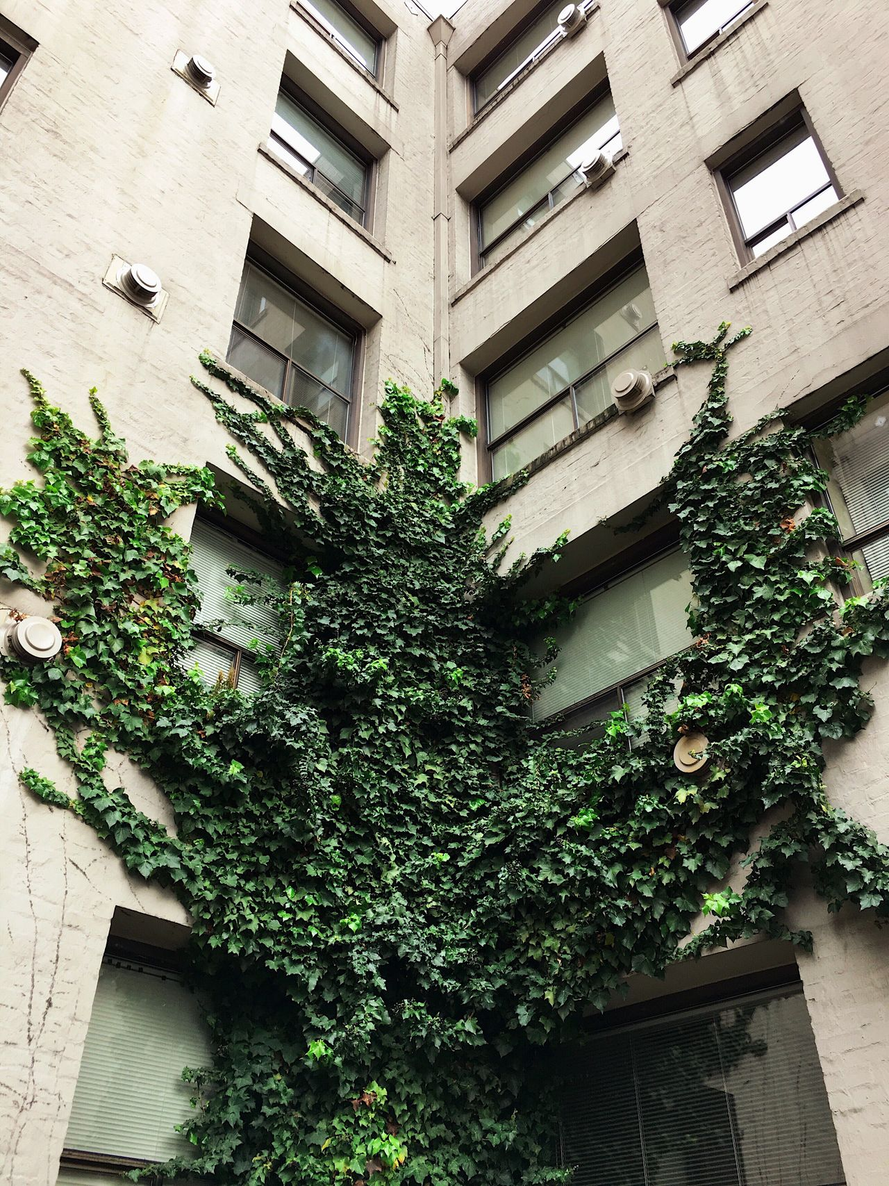 taking hold. somewhere in belltown. Seattle Building Exterior Vines