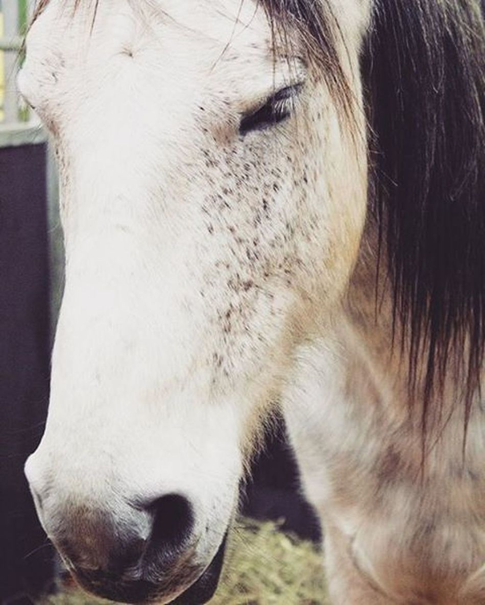 Horse Internationalgreenweek Berlin Germany 2016 Animal Portrait