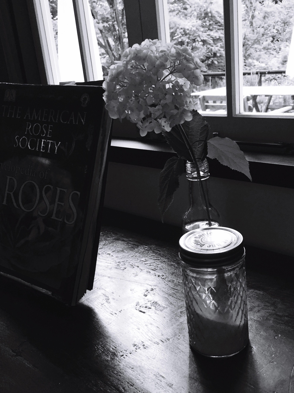 今年はたくさんの紫陽花にかこまれました♡ Hydrangea Flowers_collection Flowers 1枚目のあじさい Enjoying Life