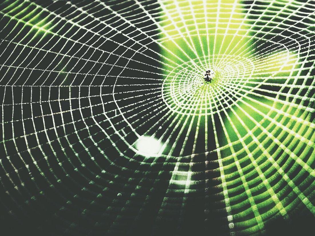 Neture Spider Annimals Macro Nature