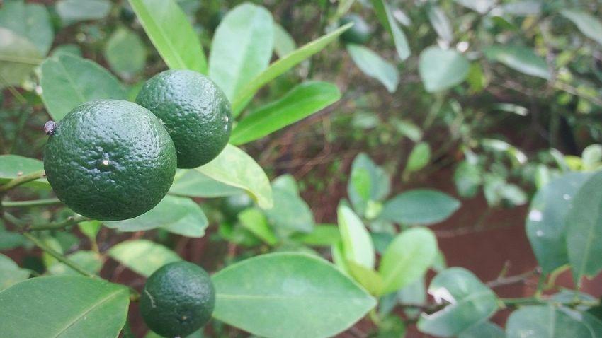 Lemon in thai