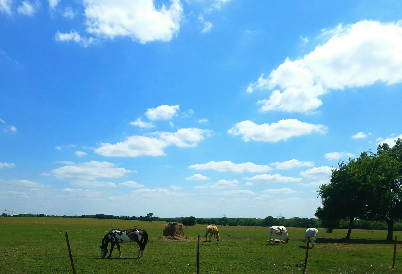 domestic animals, mammal, grazing, livestock, horse, animal themes, sky, field, cloud - sky, cow, cattle, herbivorous, pasture, grass, nature, tree, sheep, landscape, day, farm animal, large group of animals, beauty in nature, outdoors, no people, rural scene