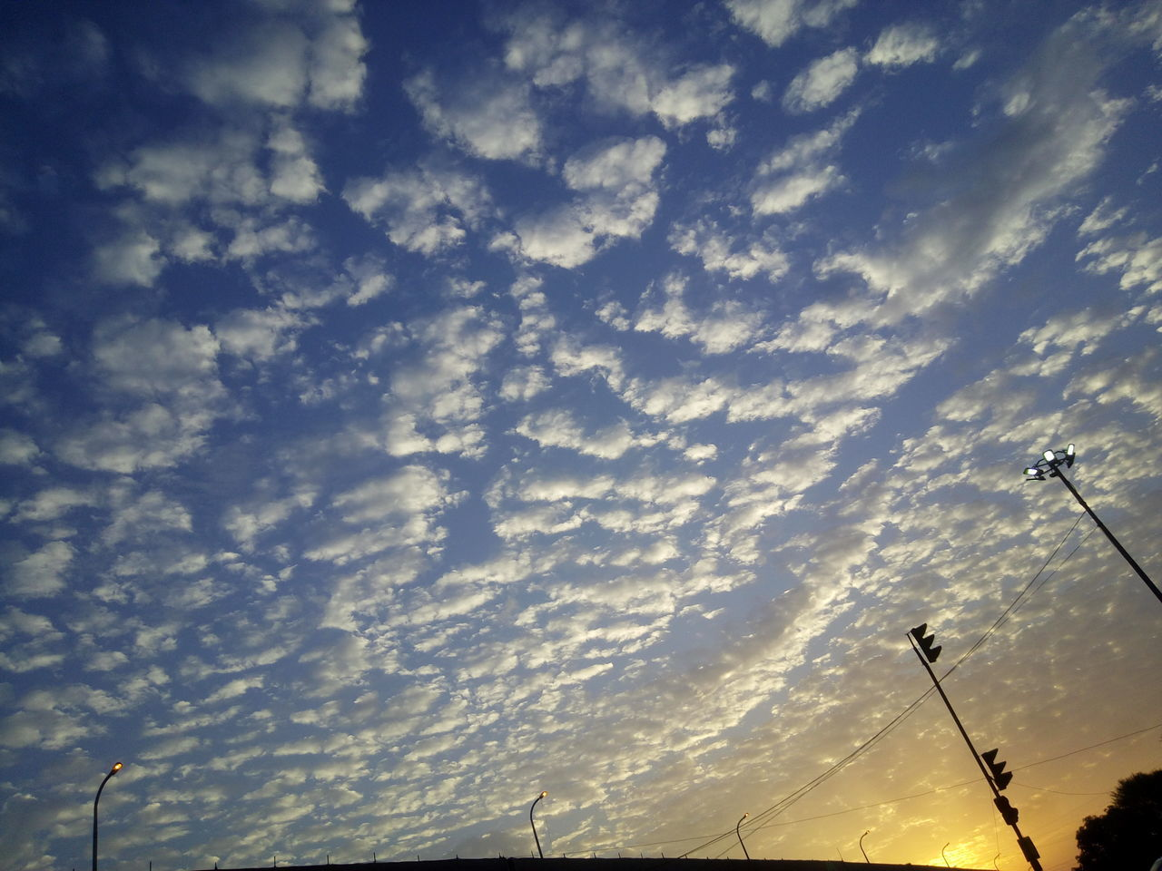 Low Angle View Cloud - Sky Sky Sunset No People Outdoors Nature Day Beauty In Nature Nature Tree Animal Text The City Light Food And Drink Mammal Transportation Railroad Station Platform Animal Wildlife Freshness Animal Themes Grass Animals In The Wild Close-up Adapted To The City