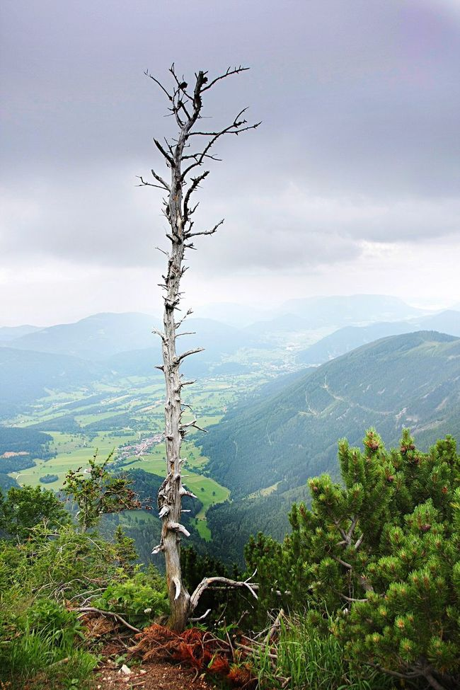 Bare Tree Over Valley Hill View Alpine Landscape Austria Green Clouds Dramatic Nature Sight Birds Eye View Hiking Horizon Beautyful  Amazing