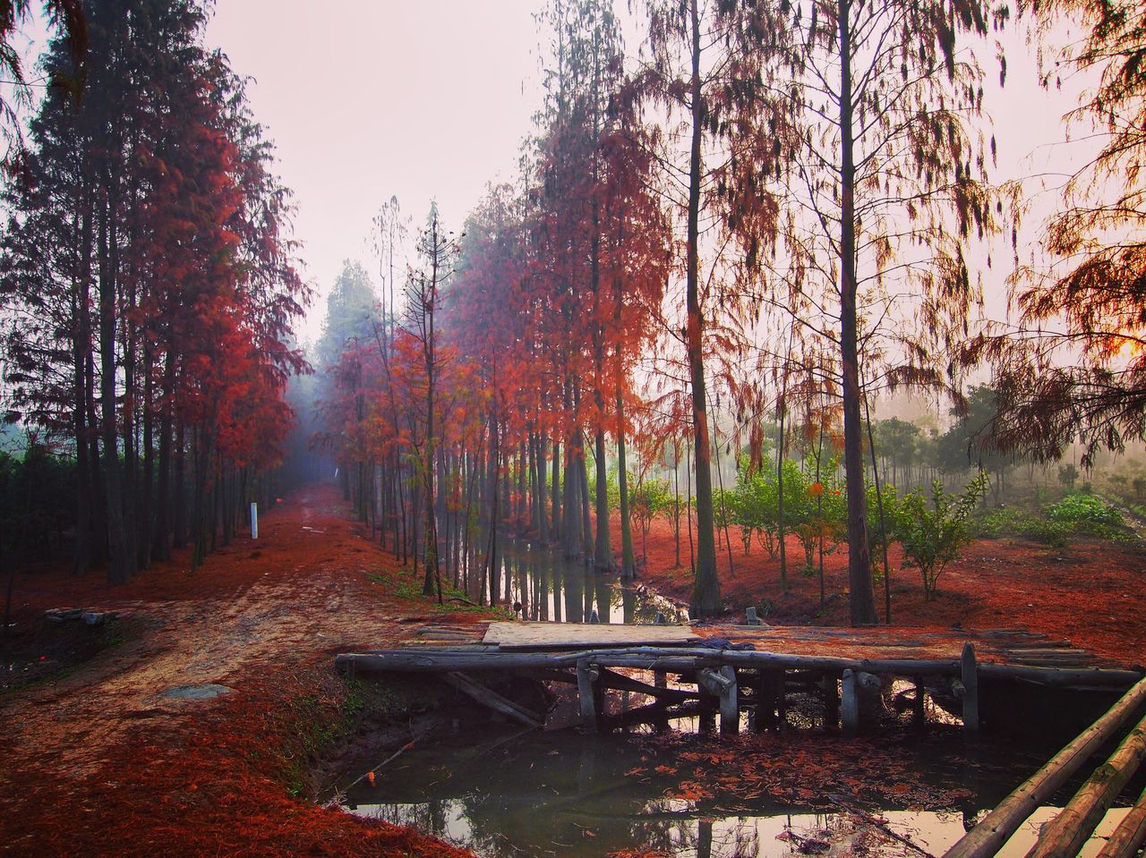 Tree Autumn Transportation Change Tranquility Forest Tranquil Scene Nature Day No People Scenics Beauty In Nature Growth Outdoors Water Sky