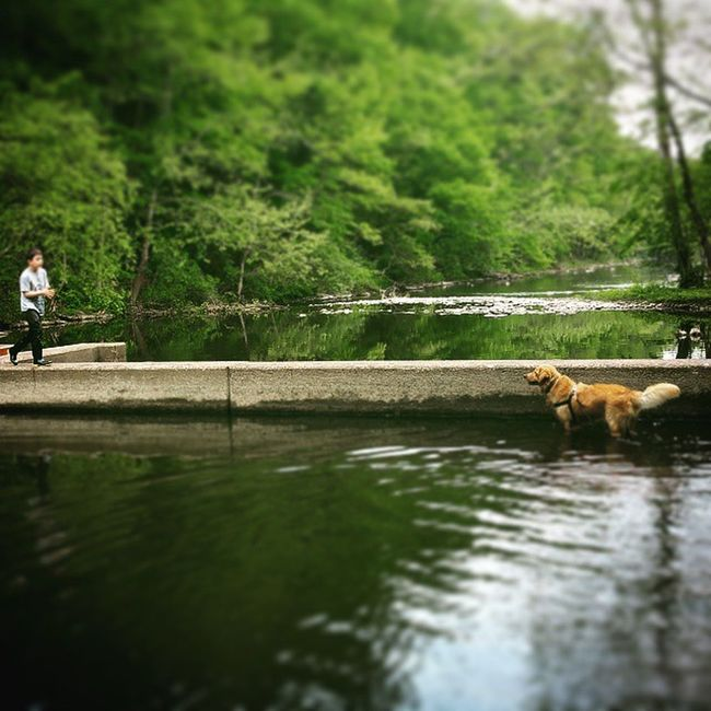 Here boy! Come, Good dog Mydogisbetterthanyours Mysoniscuterthanyours Hikingpennsylvania Pennsylvania Hiking Lakenockamixon Creekswimming Humidouthere Bonding Aboyandhisdog Boysbestfriend Mytwoboys Goldenretriever Goldensofinstagram Gooddog AdoptDontShop Rescuedogsofinstagram
