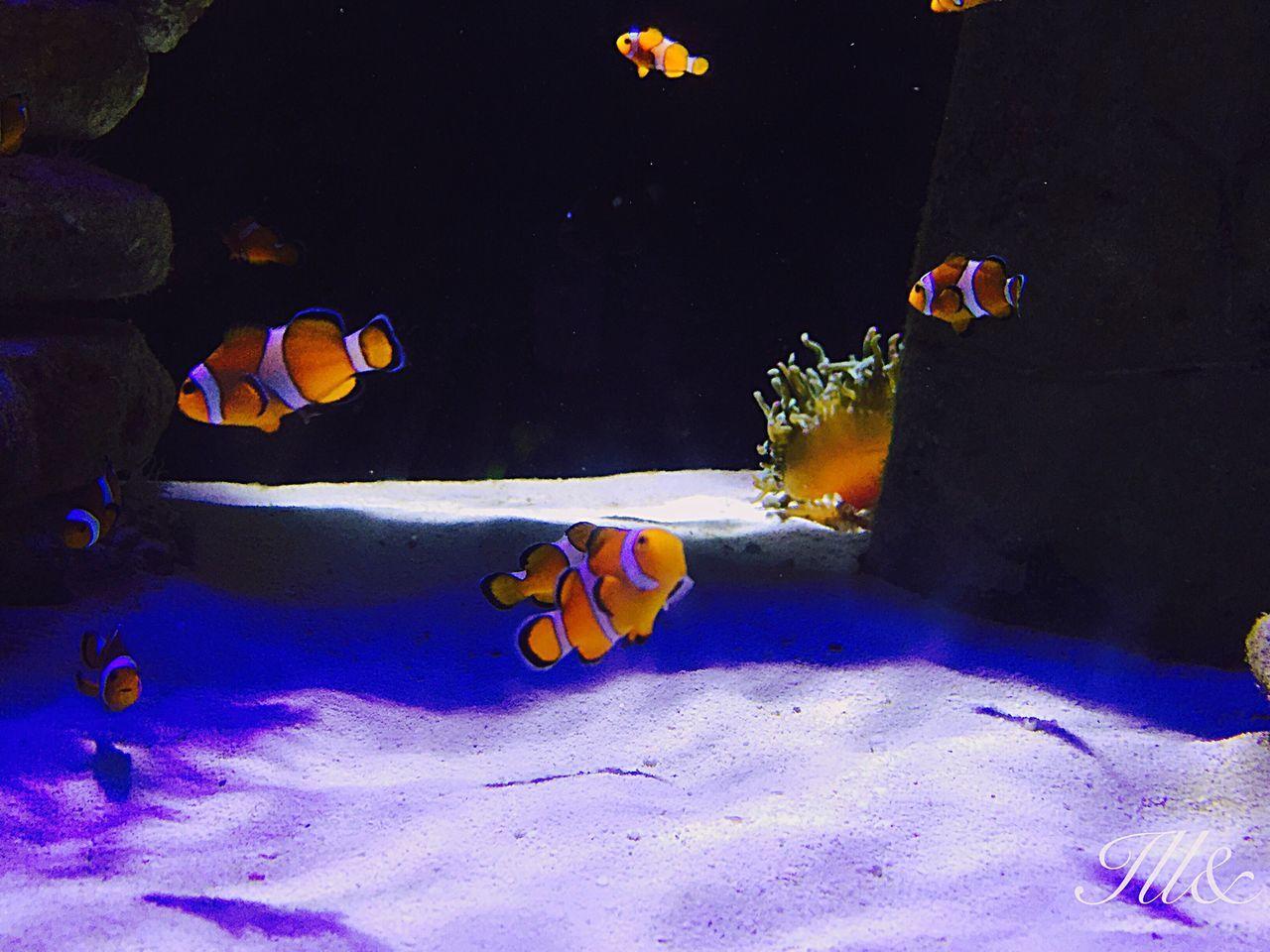 Bahamas Nassau Atlantis Hotel Clownfish MyAdventure Sailor Ill&