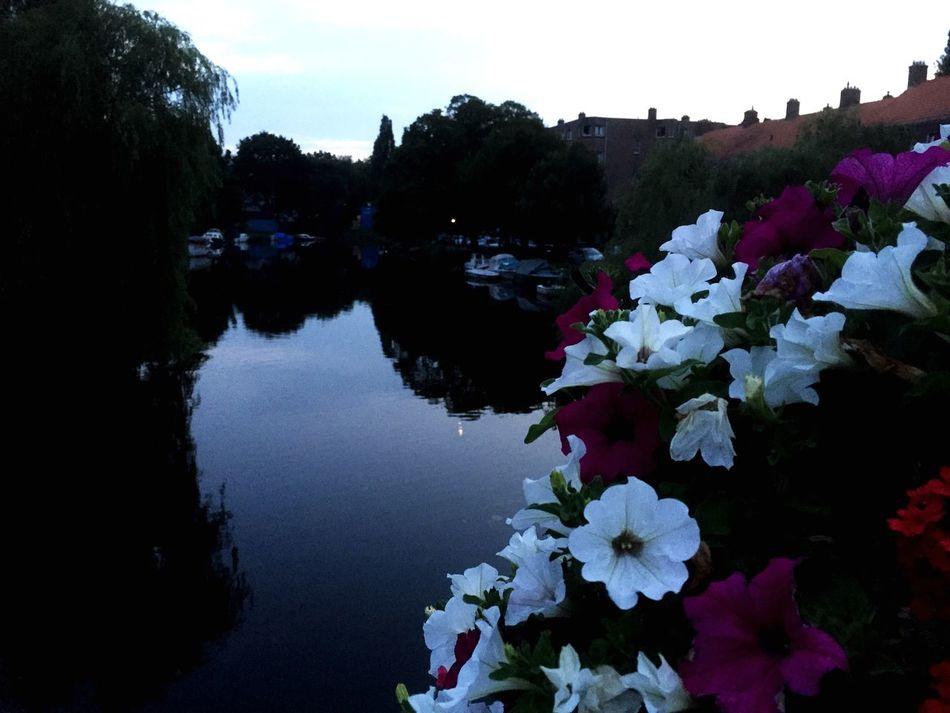 Flowers Beautiful Walking HelloAmsterdam Relaxing With Alexx  🇳🇱