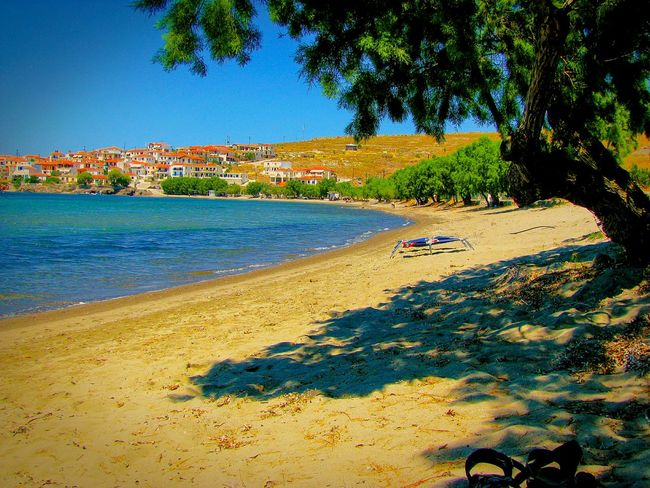 Beach Beach Photography Sandy Beach The Great Outdoors - 2016 EyeEm Awards Life Is A Beach Shadow Tree Tree Shadow Village Seaside Village Summer Memories 🌄 Seascape Seashore The Essence Of Summer Lesvos Island Greek Island Greek Islands Shades Of Blue Blue Sea Tree Branches Blues Blue Wave Tamarisk Trees