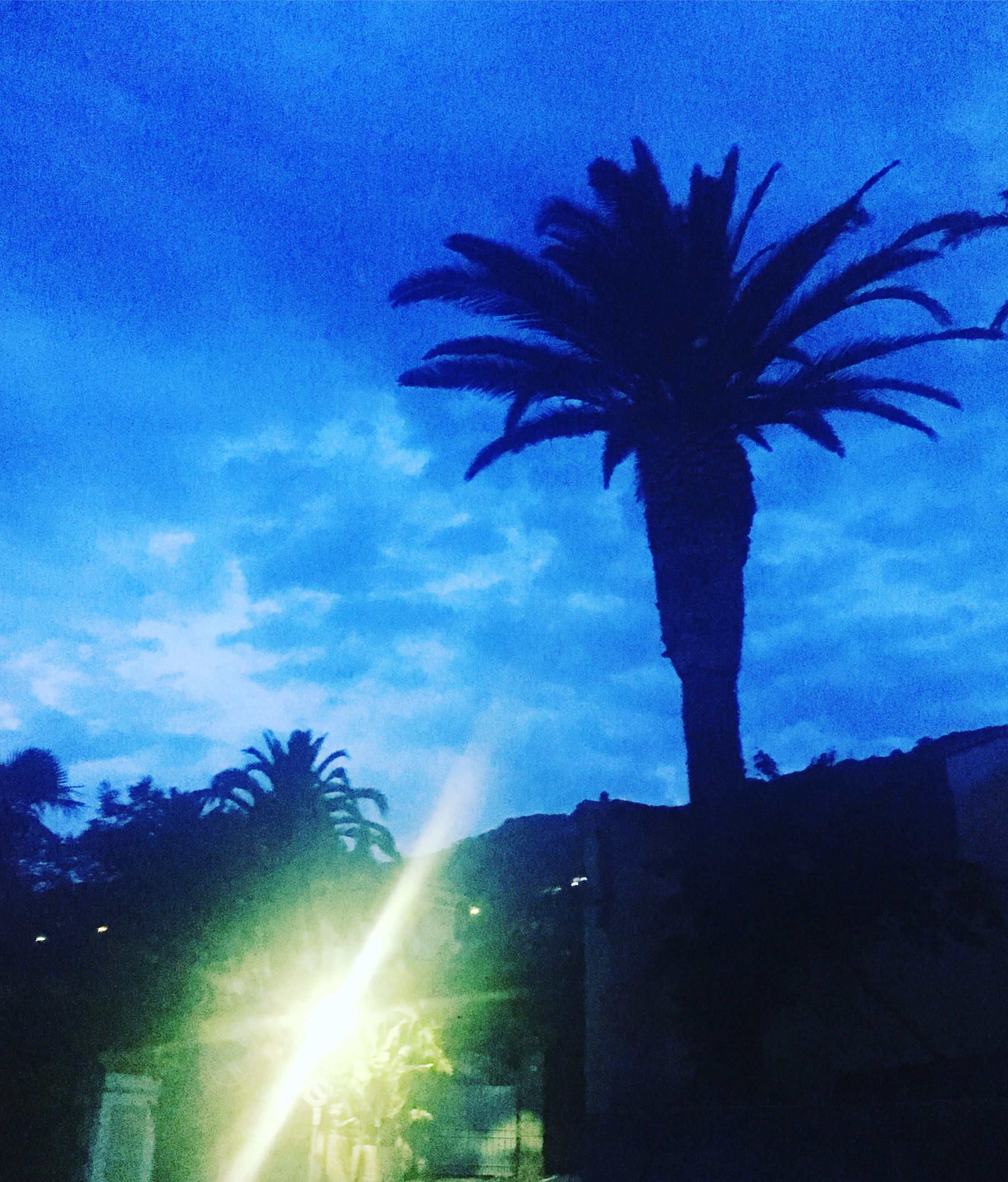 silhouette, palm tree, low angle view, sky, tree, outdoors, nature, beauty in nature, no people, sunset, night