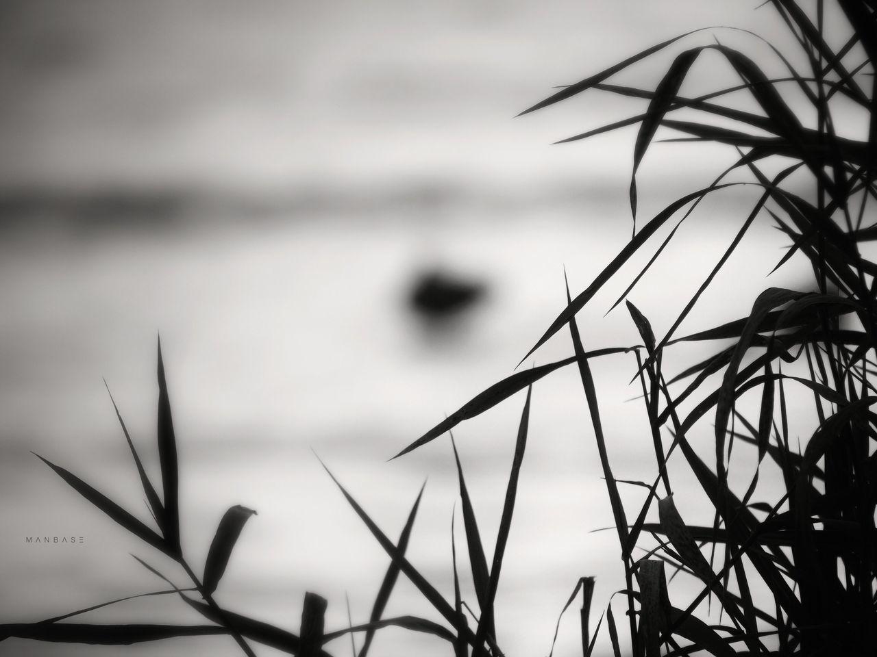 D u c k ~ Tadaa Community ~ Eye Em Nature Lover ~ Black & White ~ P510