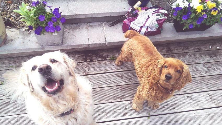Pets Dog Flower Outdoors