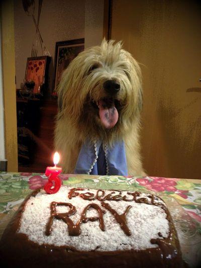 Aniversari Ray 3 Anys!