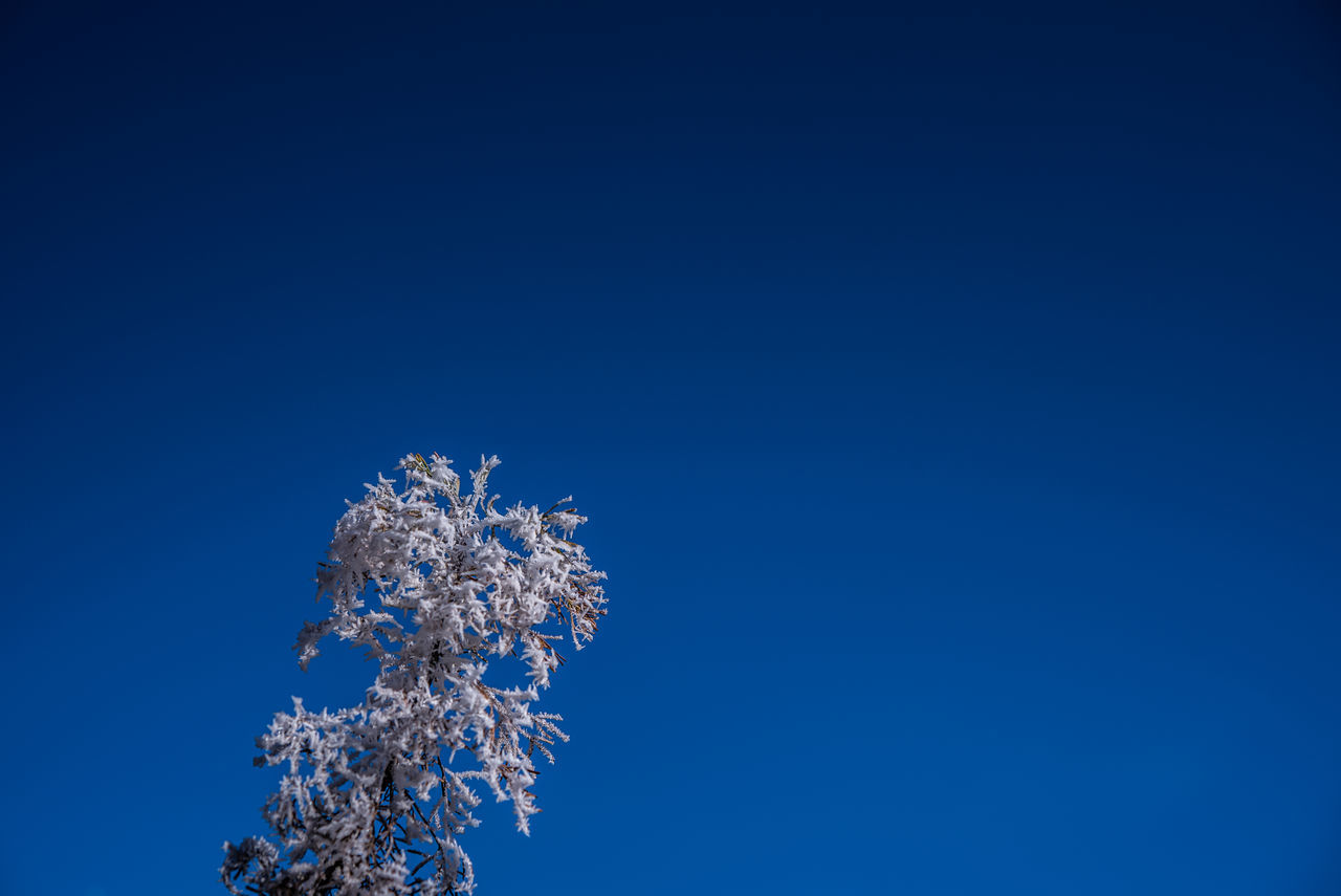 Beauty In Nature Blue Clear Sky Close-up Cold Temperature Day Flower Frost Low Angle View Nature No People Outdoors Sky Tree White Frost Winter