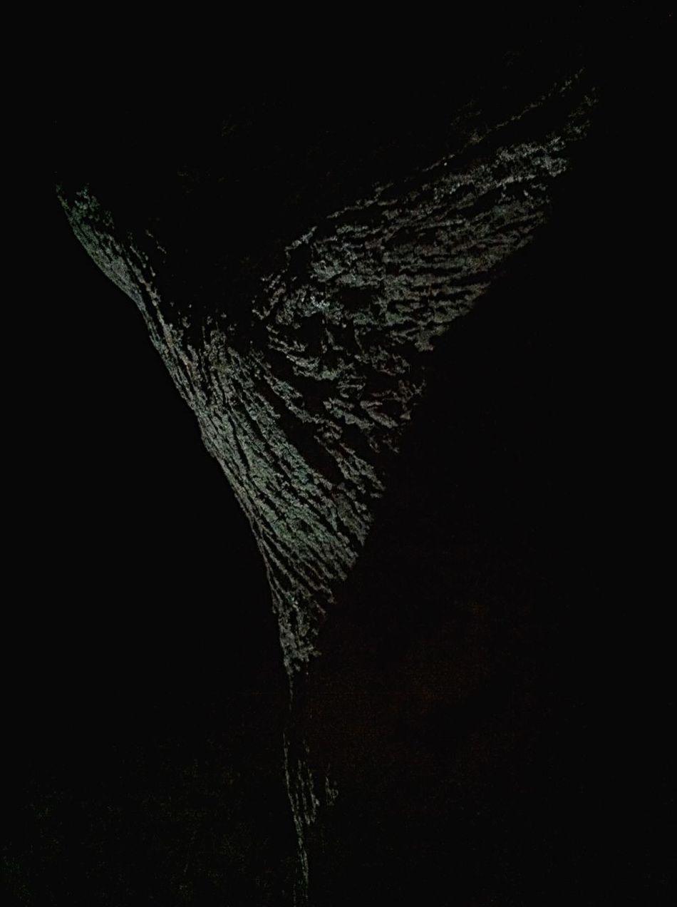 Light wings draw over the tree bark. Dibujando alas de luz sobre la corteza de un árbol.