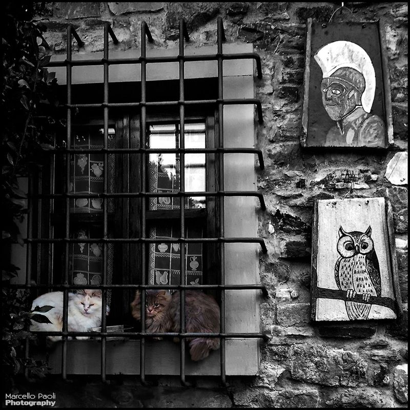 cat blackandwhite black and white colorsplash eye4photography  by Marcello