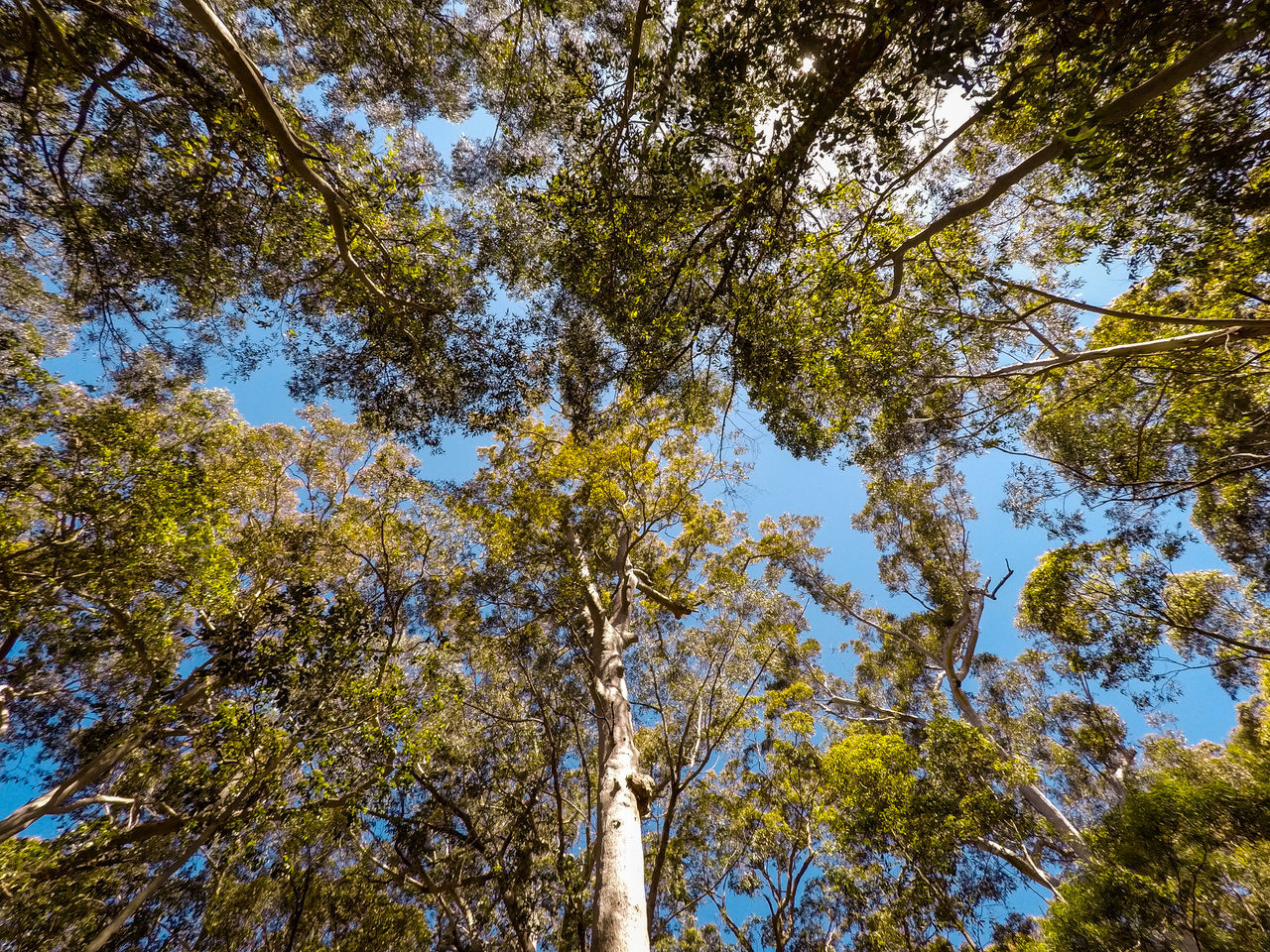 Australian bush / forest along the south-eastern coastline - 360 degree upwards view. 360 Australia Australian Bush Australian Landscape Beauty In Nature Day Green Color Growth Landscapes Low Angle View Low Angle View Nature No People Outdoors Tree