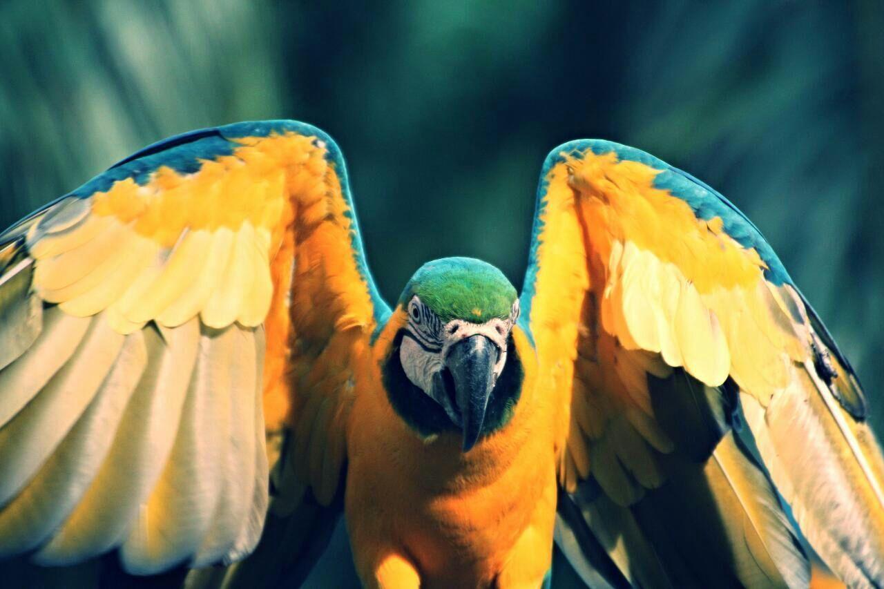 Beautiful stock photos of parrot, , Animal Themes, Bird, Day