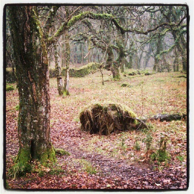 Fatherford Okehampton Walk Eerie hobbits