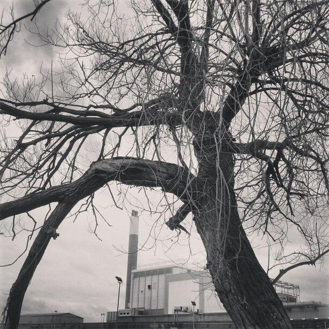 Chimney Chimneys Gnarlytree Tree branches crookedtree crookedtrees willowfilter willowfiltering willowfilterisnice
