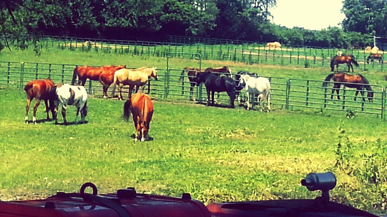 Country Life From A Tractors View Fenceline Farmlife Cowboy Country Wanna Ride? The Great Outdoors - 2016 EyeEm Awards