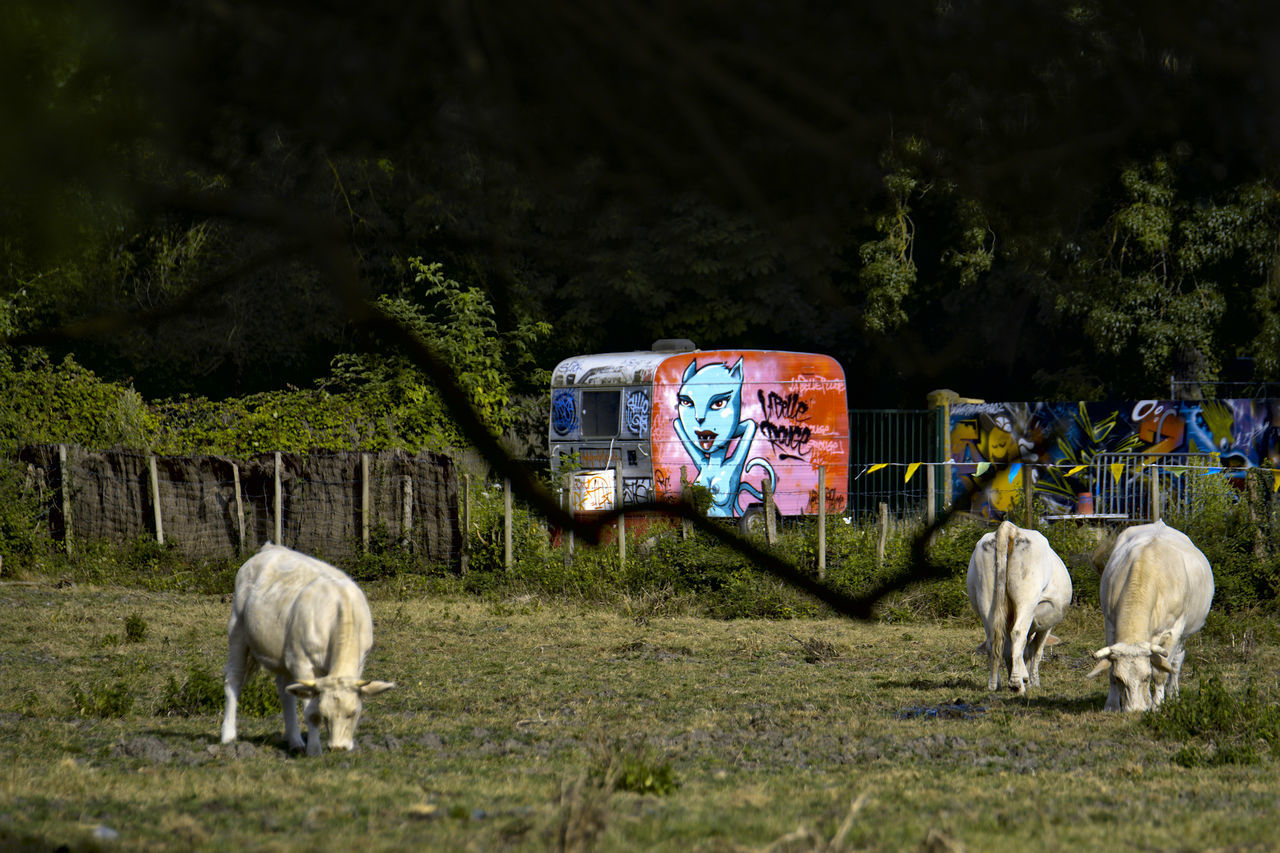 Caravan Countryside Cows Graffiti Art Grass Green Color Herbivorous Livestock Mammal Rural Scene Trailor Tree Art Is Everywhere