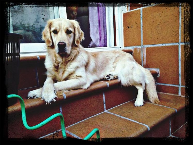 Elegancia pura!!!!! I Love My Dog