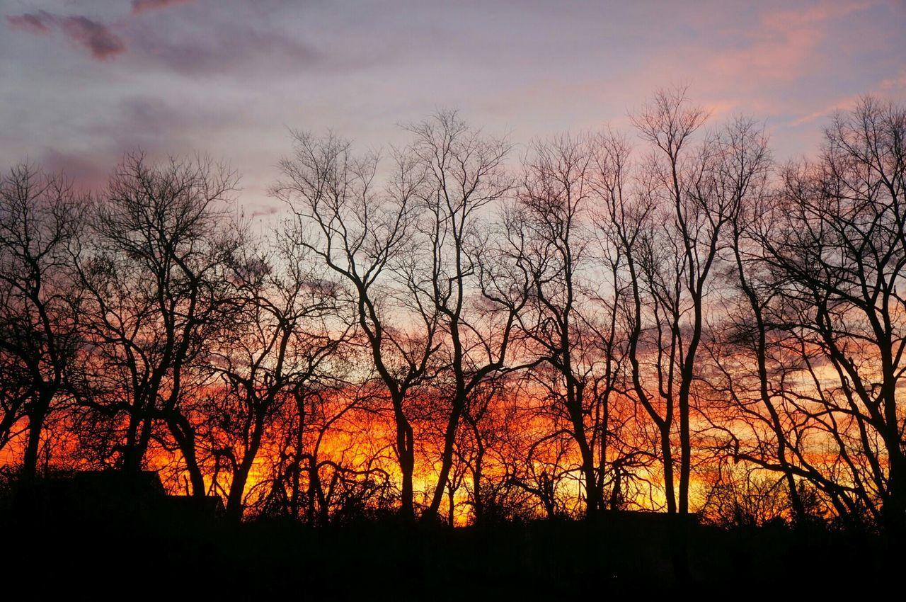 Sunset Orange Hue Evening View Winter Trees