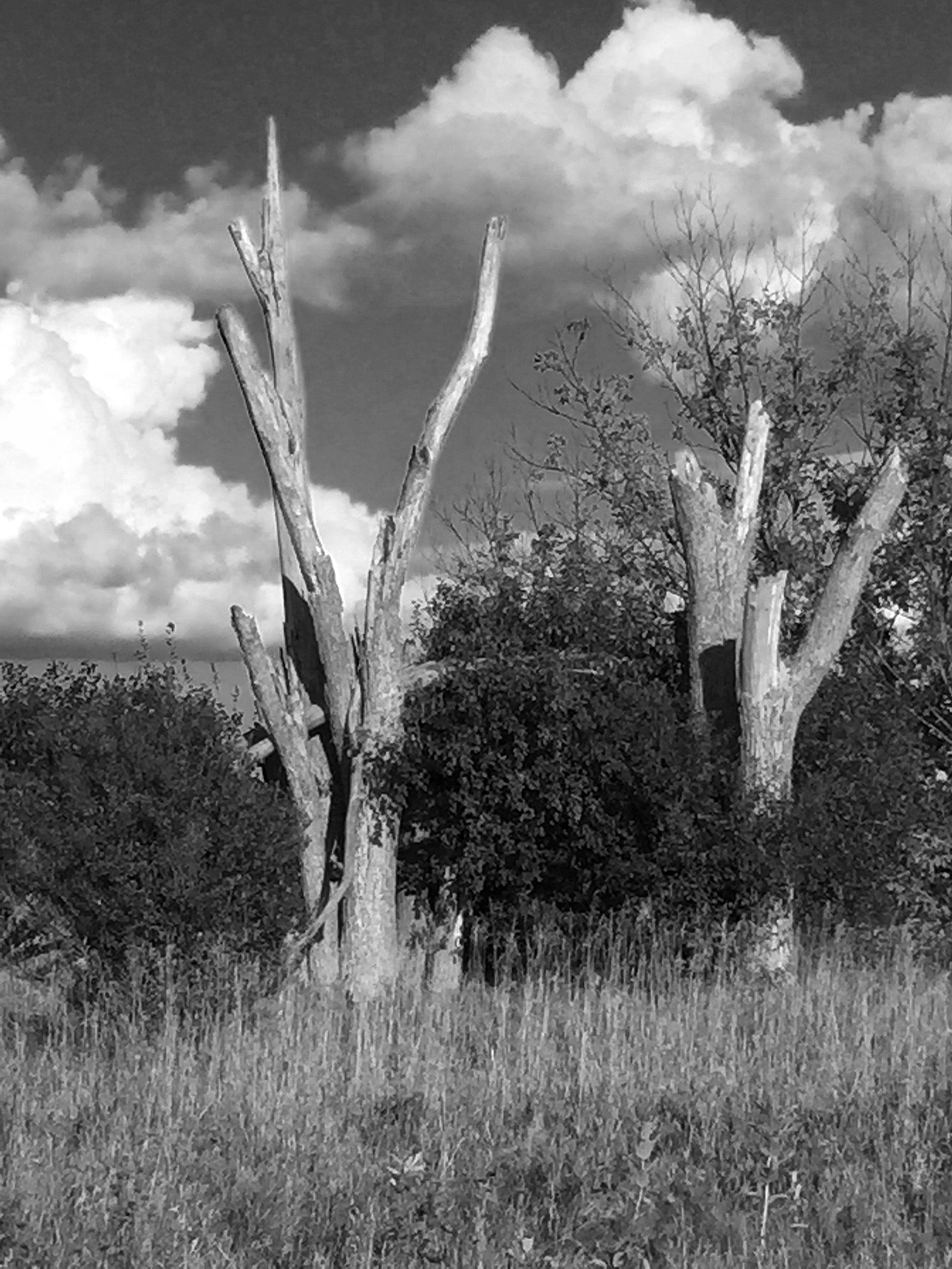 Dead trees and clouds Taking Photos Black & White In The Forest Nature Trees Forest