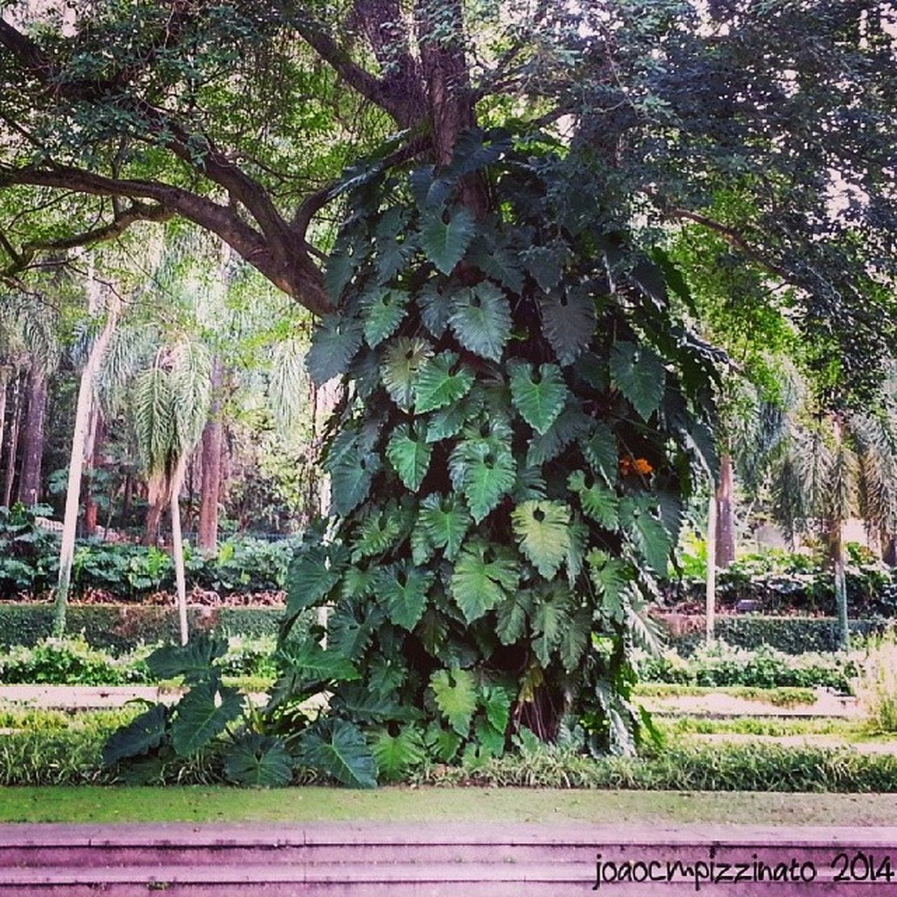 Nature in the city. Tree Plants Nature Colors city zonasul saopaulo brasil photography burlemarx