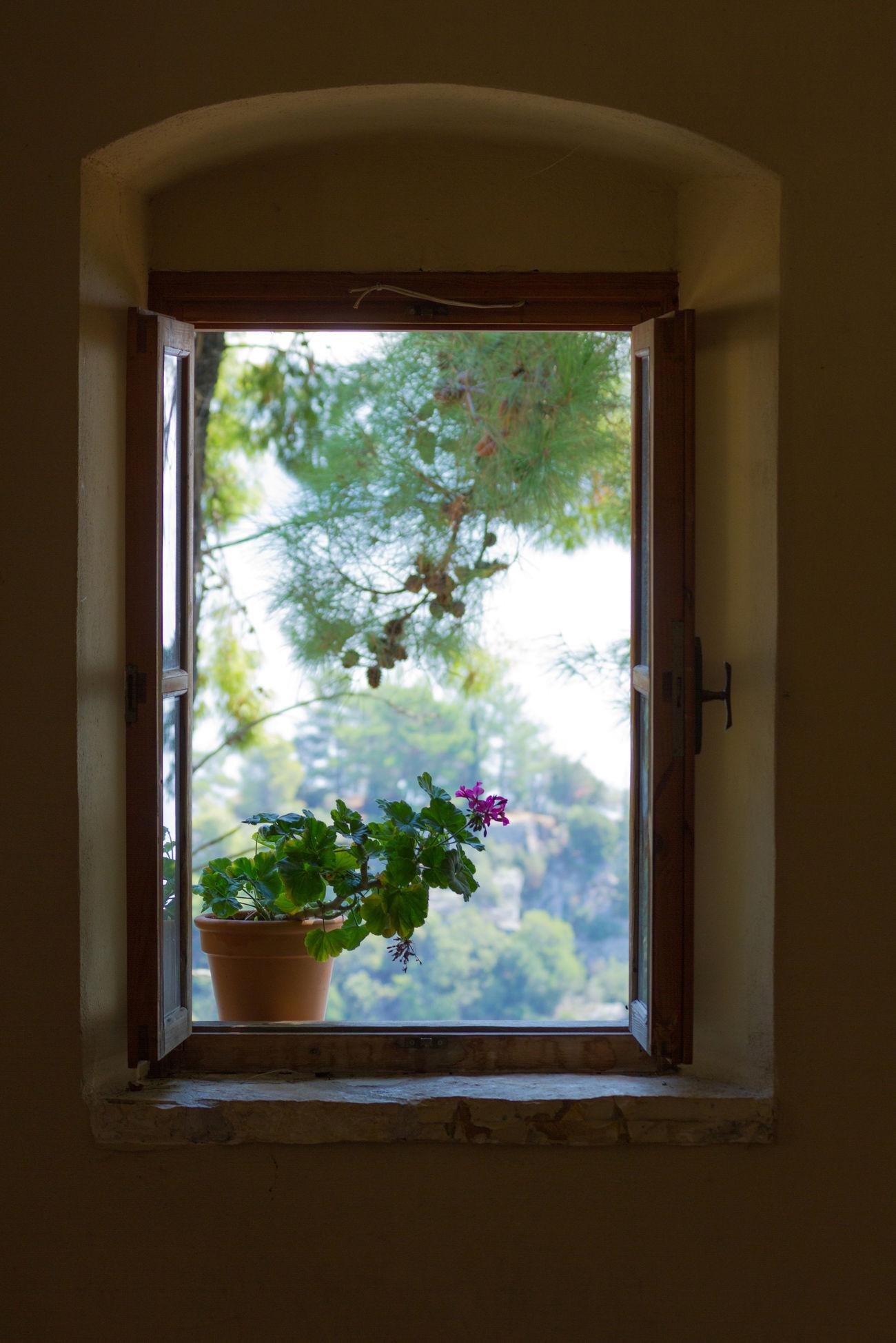 Flower Framed Greece Holiday Plant Portrait Window Window View