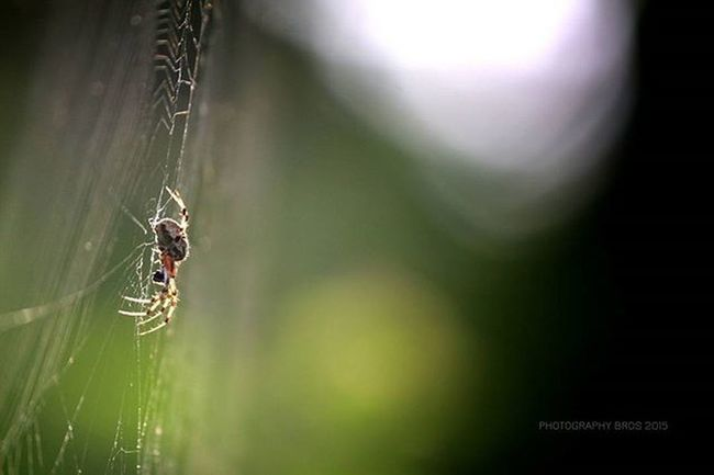 A beauty of her own world. 💓 Naturephotography Natureaddict Naturography Natureseekers Focused Mothernature Spider Spiderdome Canonphotography Canonphotos Canon 700D Vignette Nofilter Photography_love Natural Photographyislife Photographybros