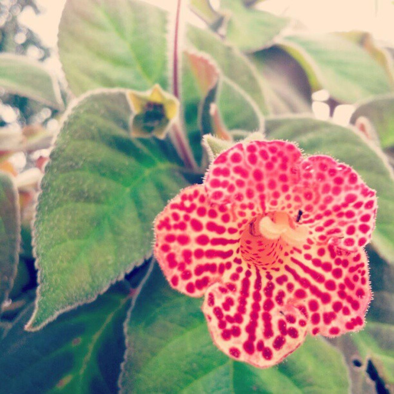 Flower Nature Picoftheday Photo