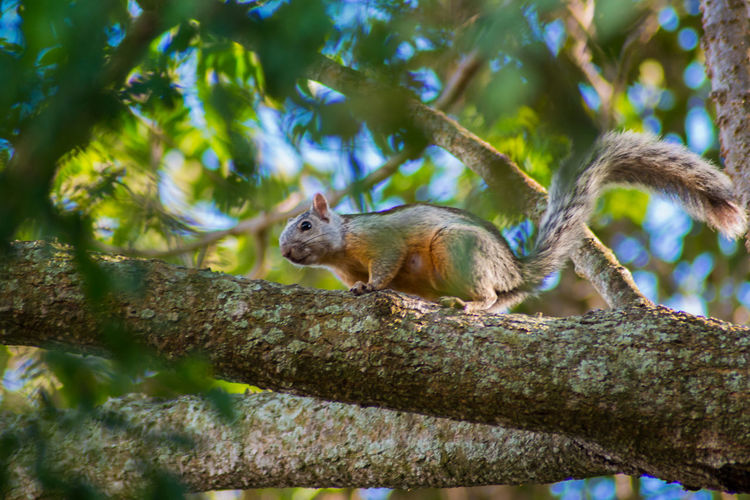 Animal Themes Animal Wildlife Animals In The Wild Day Nature No People One Animal Outdoors Squirrel Tree
