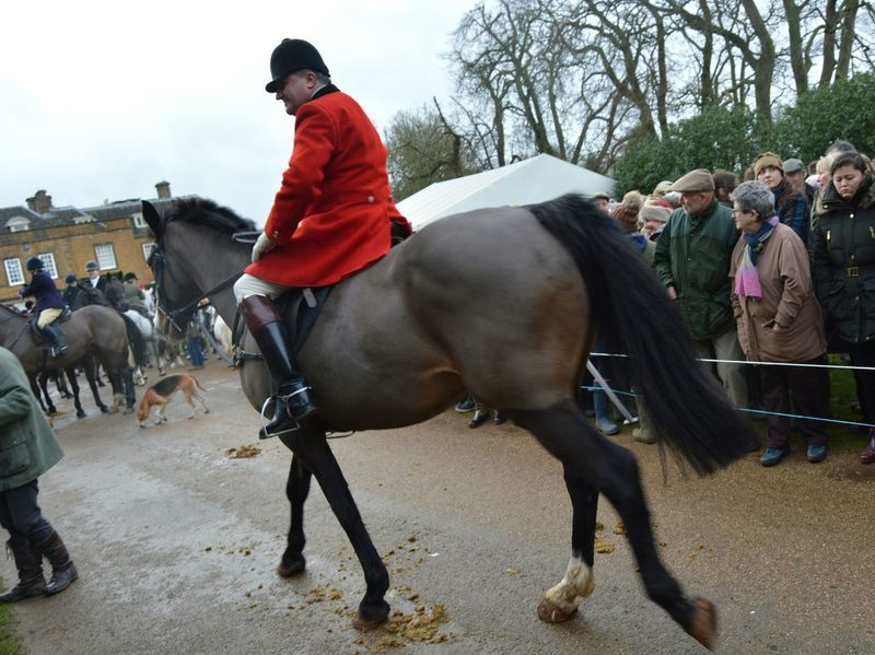 Taking Photos Four Legs And A Tail Enjoying Life English Countryside Capturing Movement Nikonphotography Horse Riding Equinelife Foxhunting Eye4photography  Boxingdayhunt Equine Photography Animal_collection Traditional Red Jacket