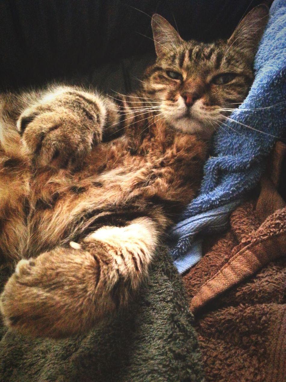 My crazy cat ...Gatu Cat Pets Cats Gatu