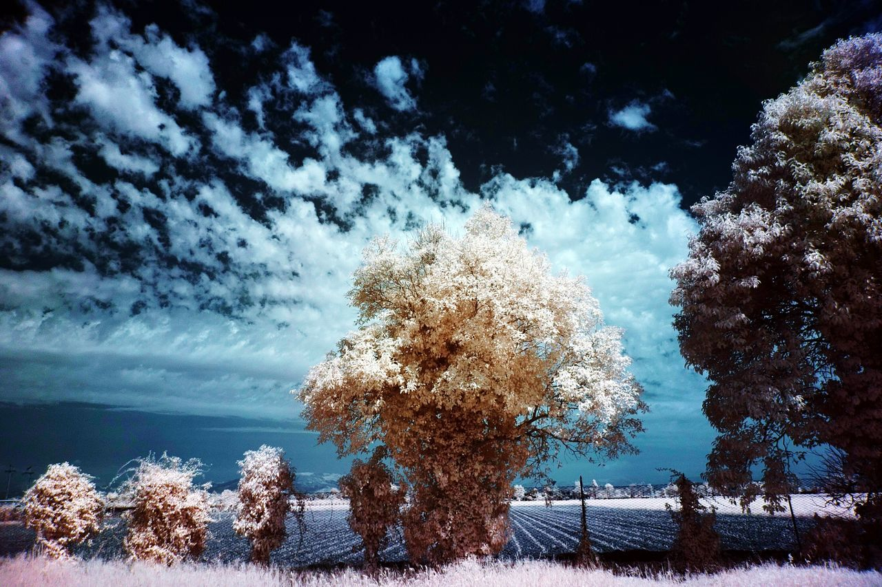 Infrared Infrared Photography Ir 72 Tree Trees Clouds And Sky Clouds Taking Pictures Check This Out