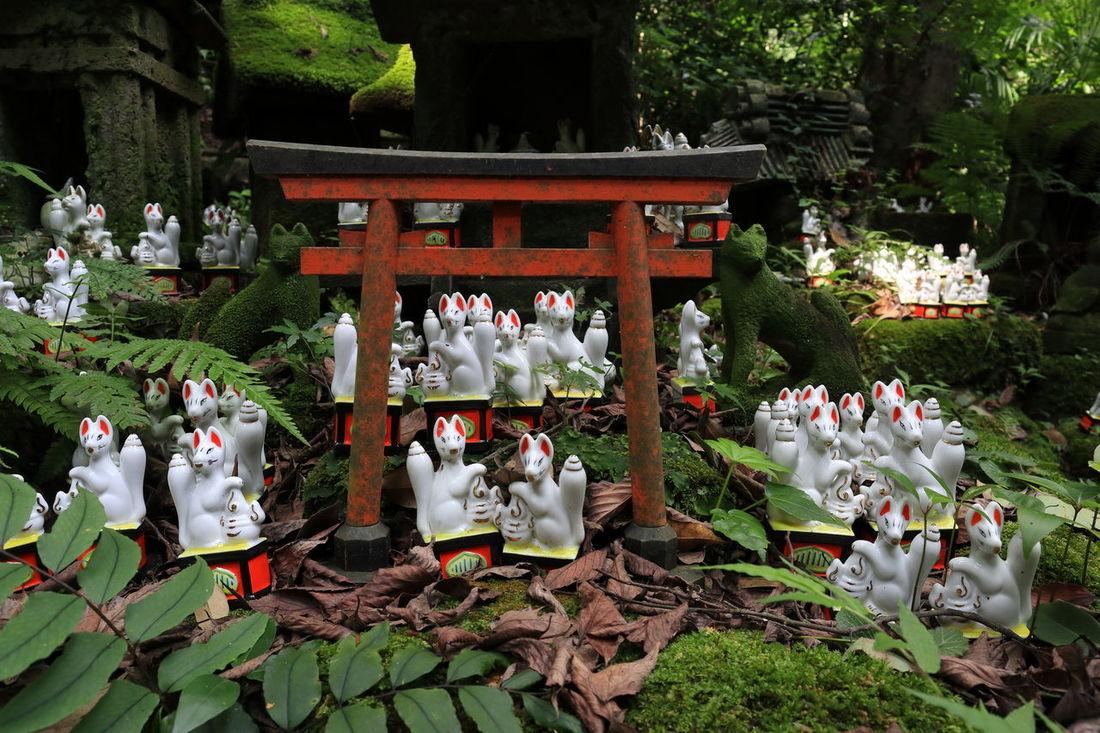 佐助稲荷 Inari Shrine Shrine Shrine Of Japan TORII Figurine  Fox Greeen Inari Moss Statue Tree 稲荷神社