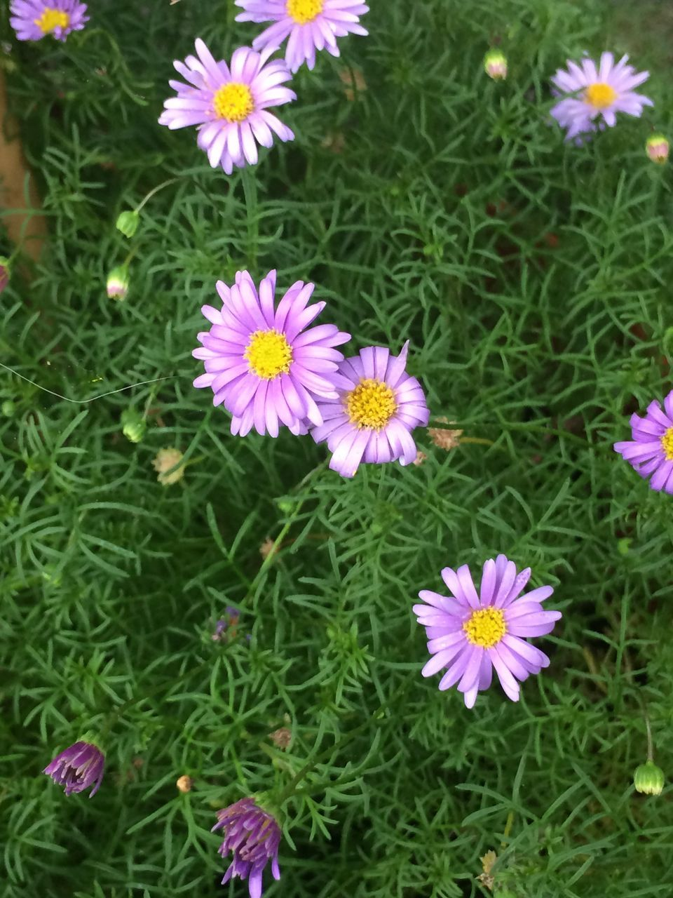 flower, growth, beauty in nature, nature, petal, fragility, freshness, plant, flower head, blooming, field, no people, green color, high angle view, outdoors, day, purple, grass, close-up