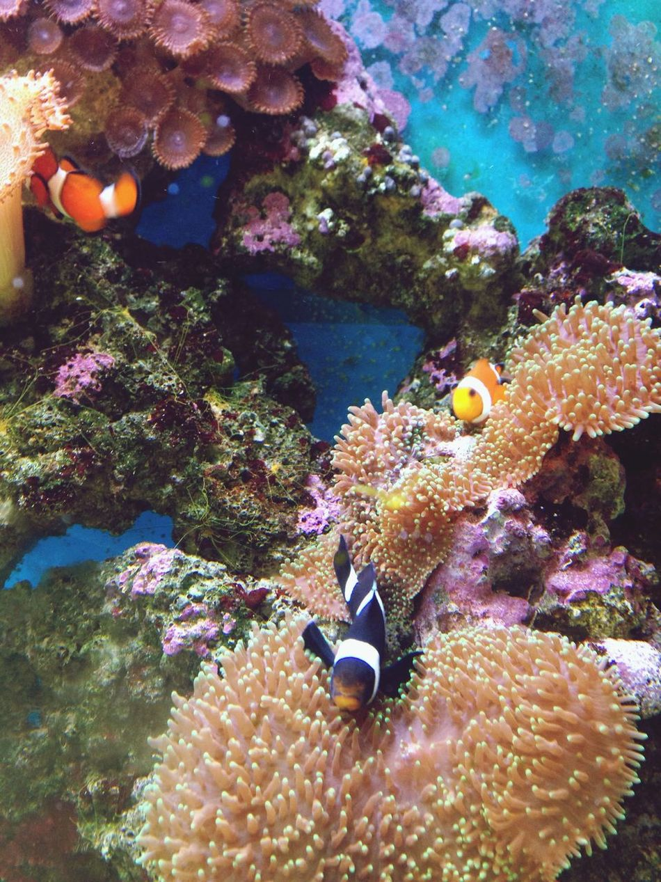 Looking for nemo haha Finding Nemo Found Nemo Fish Peixes