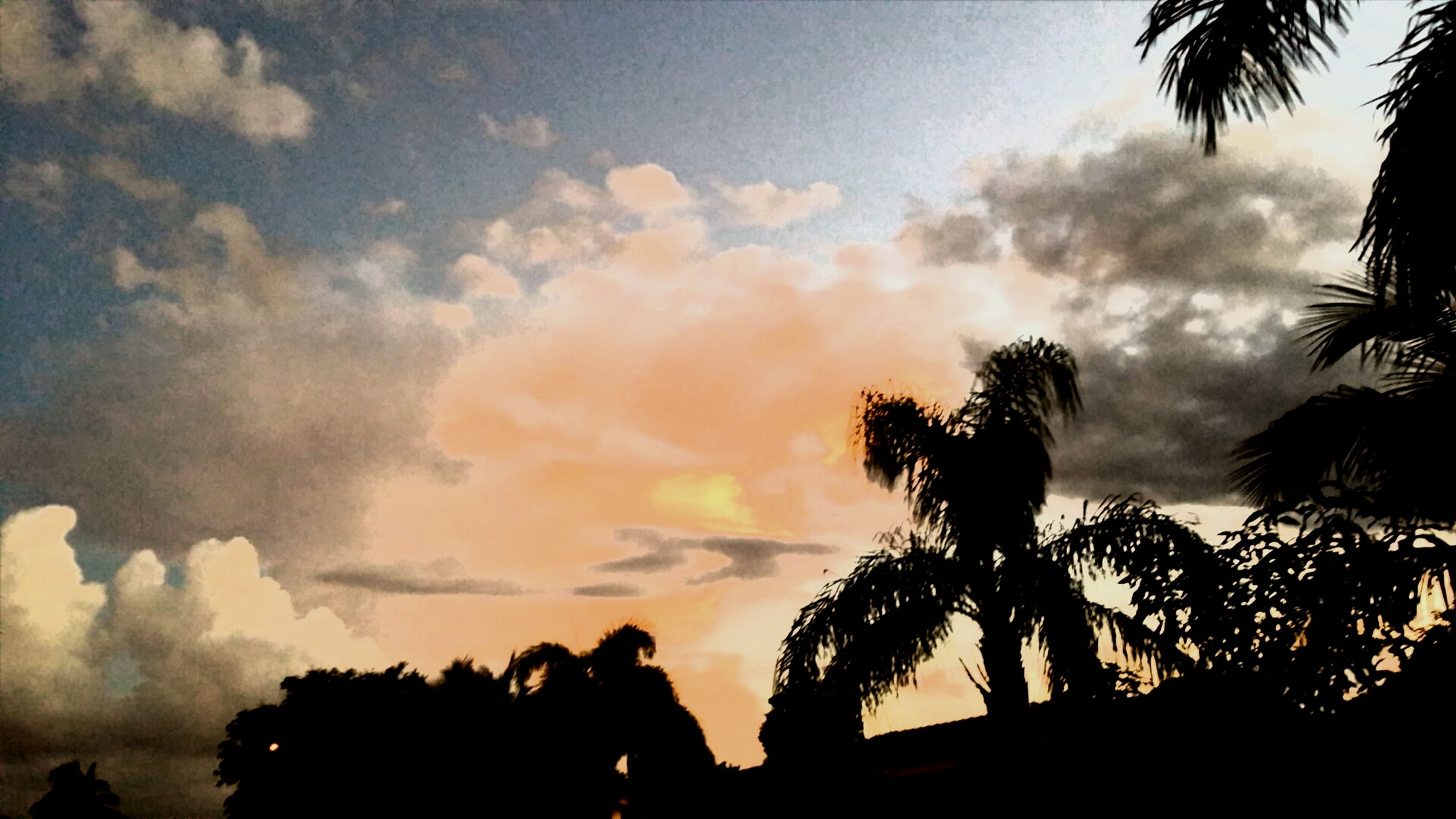silhouette, palm tree, sky, tree, sunset, low angle view, cloud - sky, beauty in nature, tranquility, growth, nature, scenics, tranquil scene, cloud, cloudy, dusk, outline, outdoors, idyllic, tree trunk