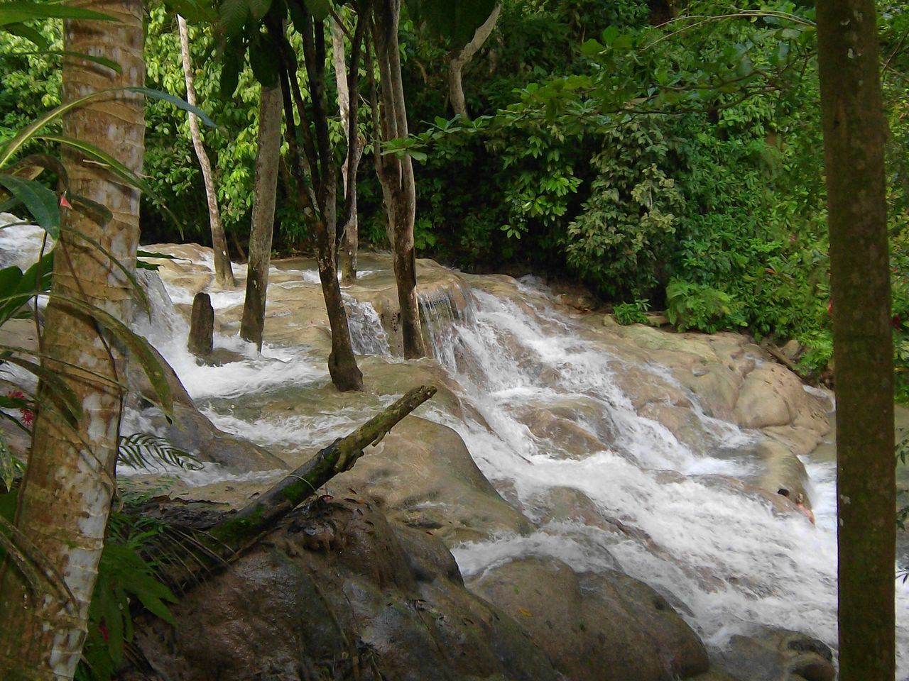 Beauty In Nature Dunns Falls Dunns River Falls Jamaica Nature No People Plant Rock - Object Scenics Tree Water Waterfall