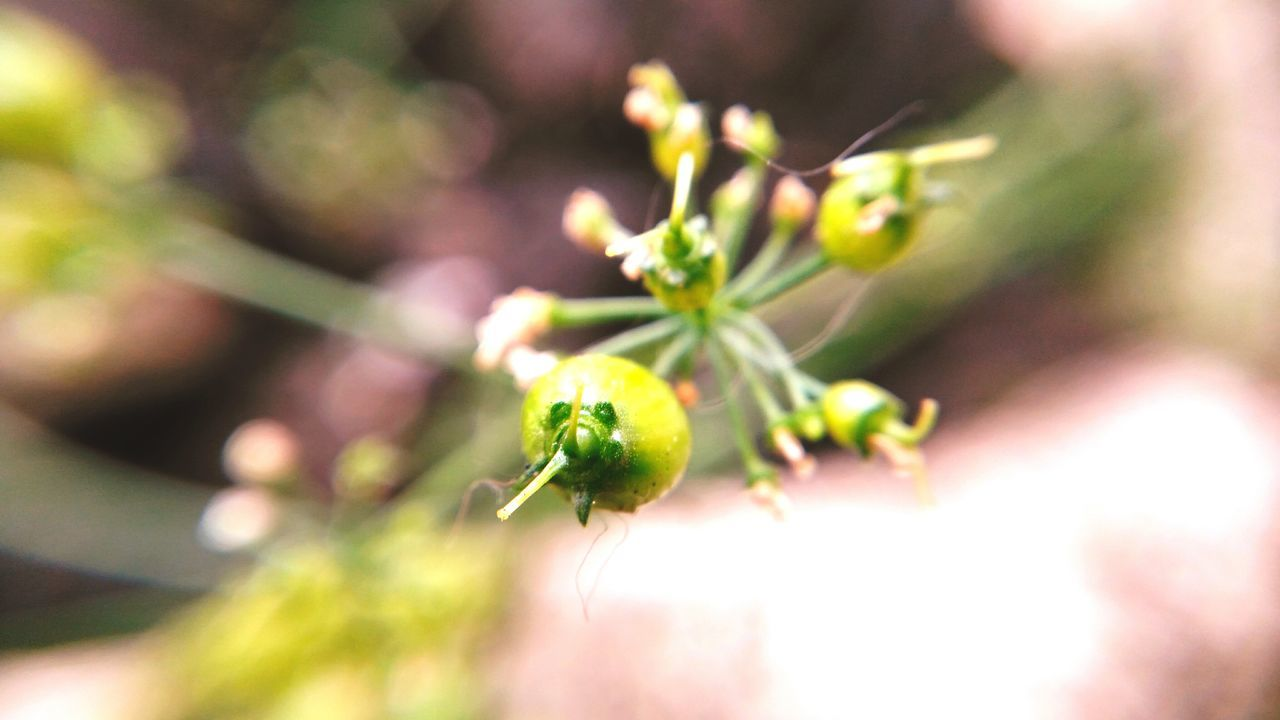 growth, plant, nature, beauty in nature, no people, close-up, flower, outdoors, green color, fragility, freshness, day