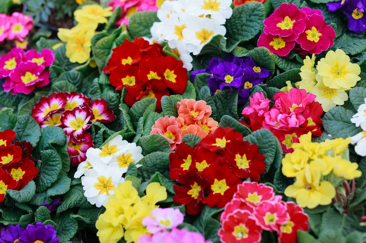 Beauty In Nature Blooming Close-up Day Flower Flower Head Fragility Freshness Growth Multi Colored Nature No People Outdoors Petal Plant