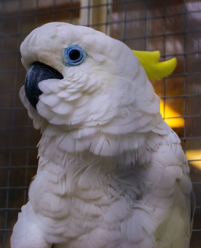 Bird Animal Themes One Animal Animals In The Wild Beauty In Nature Nature Animal Head  Nature Nature_collection Summer Museum Autumn Photooftheday Forest Garden Natgeo Close-up Beak Focus On Foreground No People Pink Color Kakadu Parrot